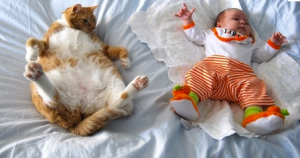 The truth about catnaps in babies